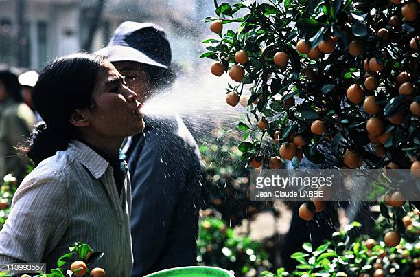 Illustration Vietnam from north to south in Vietnam in May 1994Giving water to the Mandarin tree for Lunar New Year