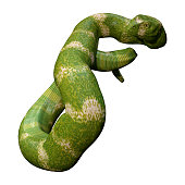 3D rendering of a green viper snake isolated on white background