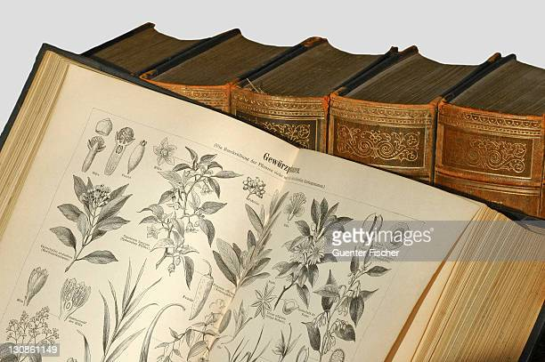 Illustrations of spice plants in an old encyclopedia