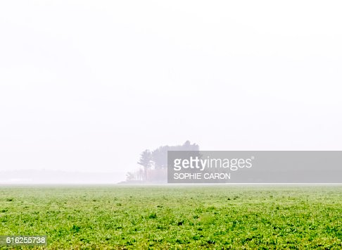 Ilot d'arbre dans un champs : Foto de stock
