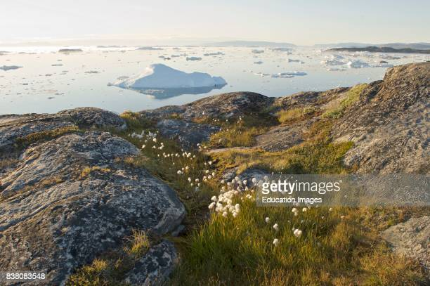 Ilulissat ice fjord seen from the coast of Sermermiut Sermermiut was an Inuit settlement in the Disko Bay Greenland The location is now part of the...