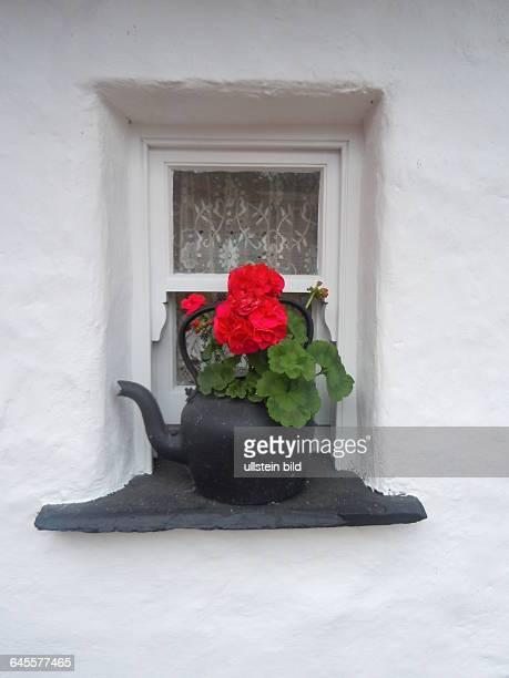 Im kleinen Fenster eines historischen Bauernhauses steht eine alte Teekann mit einer Blume als Dekoration aufgenommen im Folklore Freilichtmuseum bei...