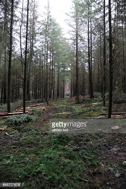 Im Staatsforst in Altforweiler arbeitet ein Unternehmen an der Holzernte Hier ist der Forwarder zu sehen ein Fahrzeug das im Wald geschnittene Stämme...