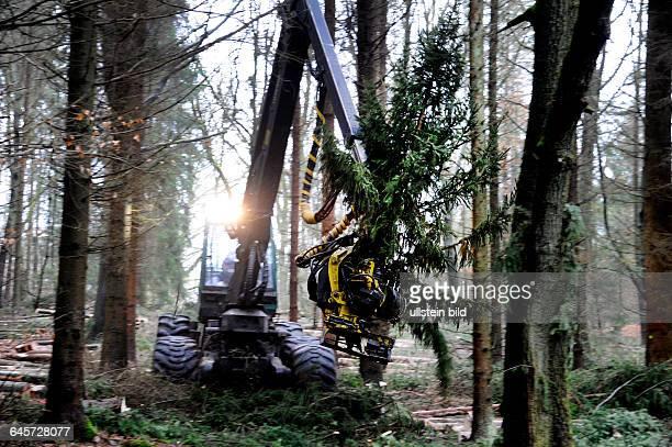 Im Staatsforst in Altforweiler arbeitet ein Unternehmen an der Holzernte Hier ist der Harvester zu sehen ein Fahrzeug das im Wald Bäume fällt...