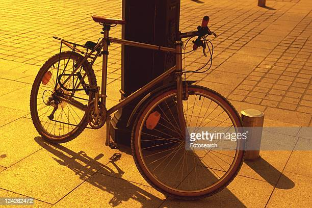 Image of a Bicycle Leaning Against a Tree By Sunset, Side View, Paris, France