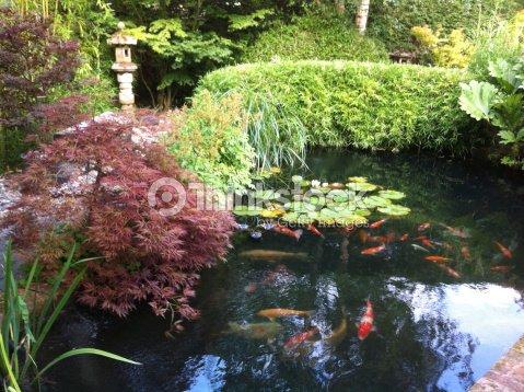 Image Dun Bassin De Carpes Koï Dans Un Jardin Intérieur Photo ...