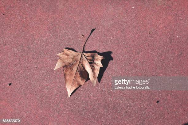 Image of a leaf of a tree on the ground