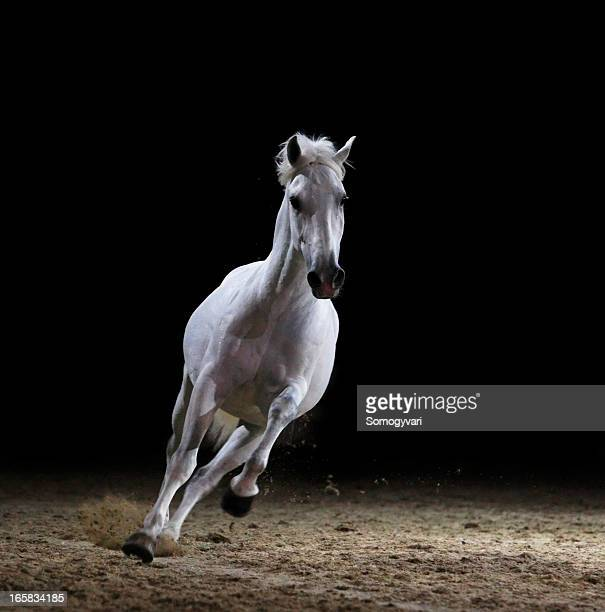 Image of a white stallion galloping on sand