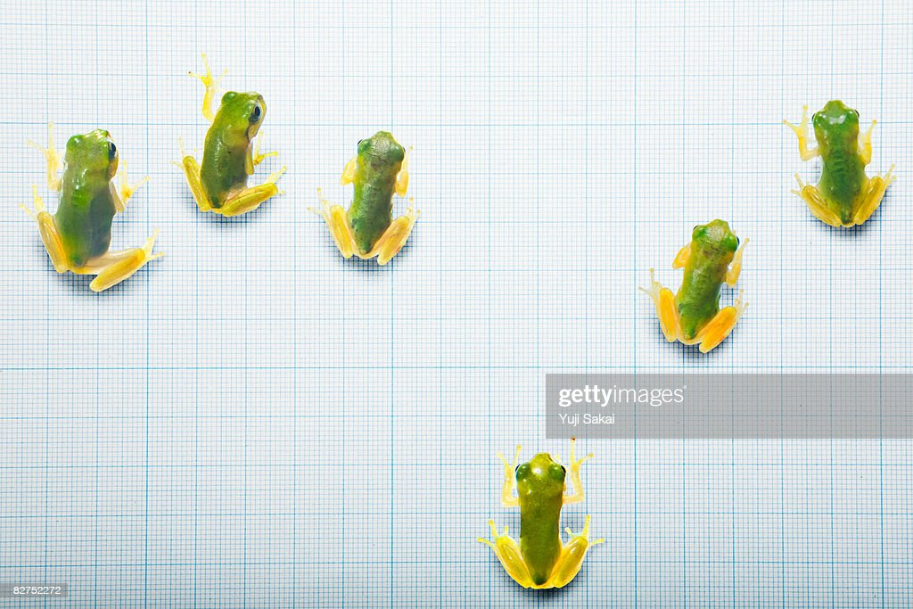 Image of green frog  : Stock Photo