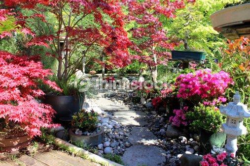 Bild von japanischen g rten und bonsaib ume ahornb umen for Japanischer ziergarten