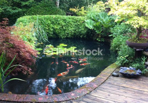 Image of koi pond in a domestic japanese style garden for Japanese style pond