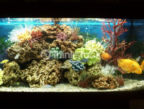 Image of marine effect tropical aquarium with parrot for Acquario acqua salata