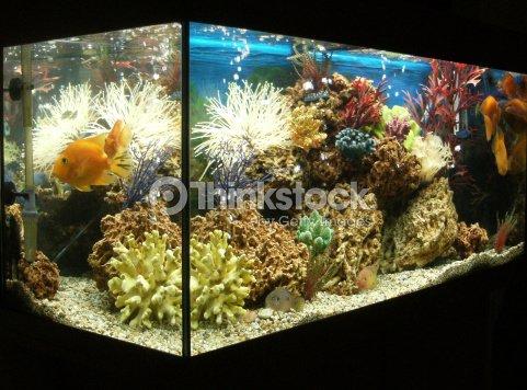 bild von marineoptik und tropischem aquarium mit papagei. Black Bedroom Furniture Sets. Home Design Ideas