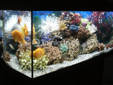 image of marine effect tropical aquarium with parrot. Black Bedroom Furniture Sets. Home Design Ideas
