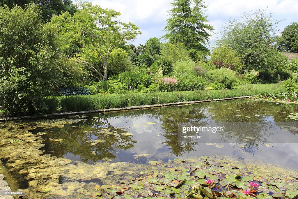Image of pink water lilies lily pond ornamental water for Ornamental pond plants