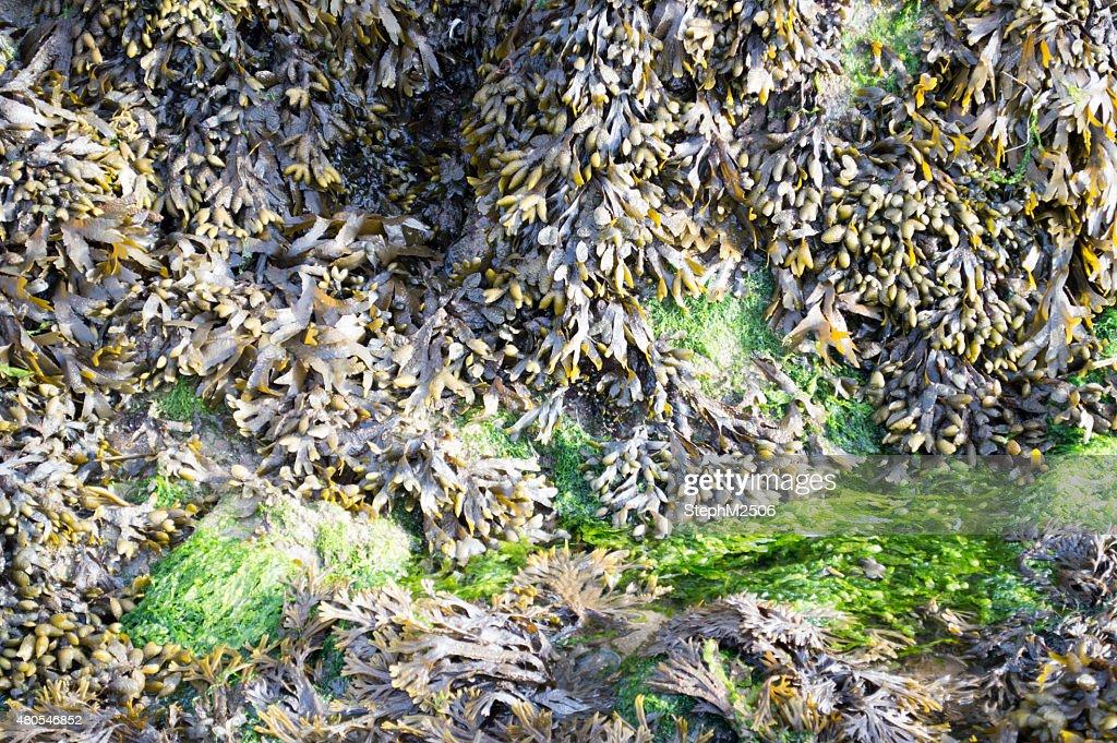 Imagem de algas em uma praia no Verão : Foto de stock