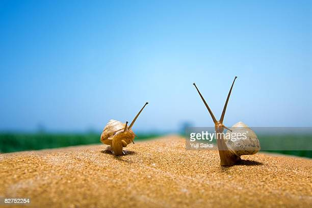 Image of snail