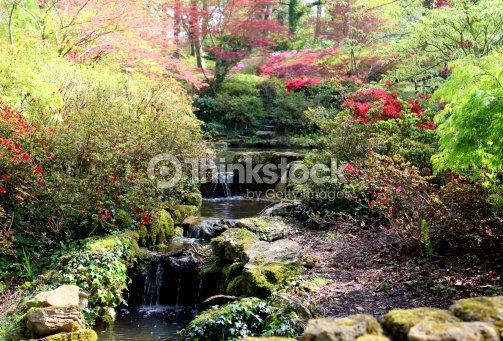 Laghetto Con Cascata Da Giardino : Immagine di woodland giardino con laghetto cascata giapponese maples