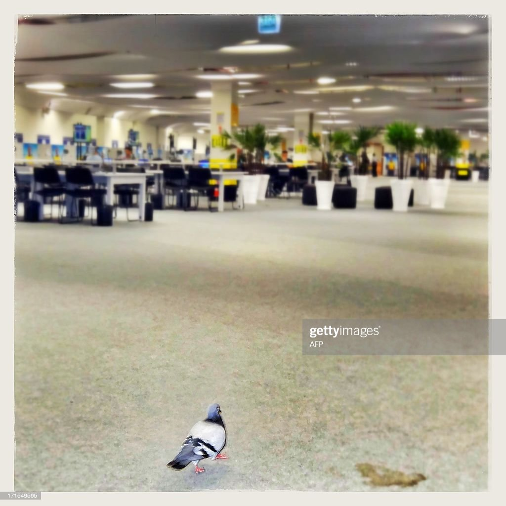 Image taken with a mobile phone showing a pigeon inside the stadium media center at the Maracana during the FIFA Confederations Cup Brazil 2013 in Fortaleza, on June 26, 2013. Attention editors : this image is part of a serie of pictures showing the backstage of the Confederation Cup competition and the daily life in Brazil as experienced by AFP photographers covering the event.