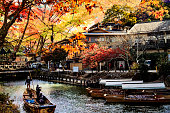 The imageing of fall seasnon in Arashiyama, Japan
