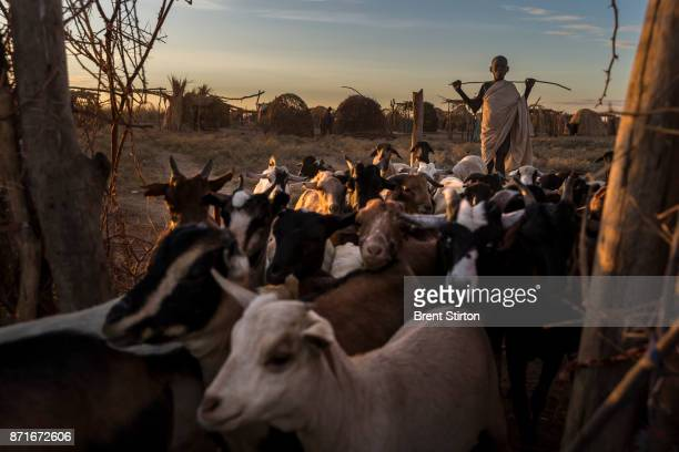 Images from an internally displaced Turkana community who have been moved off their land by Dassanech tribesman who raided their cattle and killed...