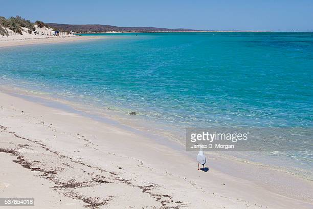 Images of whale sharks in Ningaloo Reef Western Australia Images also feature shots from Sal Salis luxury safari camp on Ningaloo Reef Western...