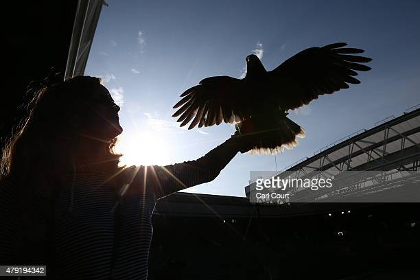 Imogen Davis holds Rufus the Harris Hawk on centre court where it is used to scare away pigeons ahead of play on day four of the Wimbledon Lawn...