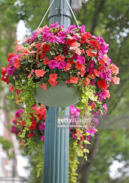 Hanging Basket Stock Photos And Pictures Getty Images