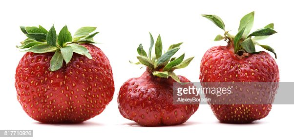 Imperfect organic sweet strawberries isolated : Stock Photo
