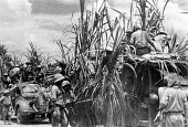 Imperial Japanese Army vehicles camouflaging with sugar canes march on during the Dutch Esat Indies campaign on March 6 1942 in Java Indonesia