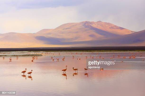 印象的なラグーナ ・ コロラダ - 赤い湖の反射、アンデスフラミンゴ鳥や牧歌的なアルティプラーノ アタカマ砂漠、火山の風景パノラマ-ポトシ地方、ボリビアのアンデス、Bolívia
