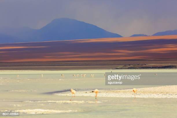 印象的なラグナ ・ ベルデ - 緑湖の反射があり、アンデスフラミンゴ鳥や牧歌的なアルティプラーノ アタカマ砂漠、火山の風景パノラマ-ポトシ地方、ボリビアのアンデス、Bolívia