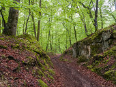 'In a beech forest (Fagus). Spring, Southern Germany'