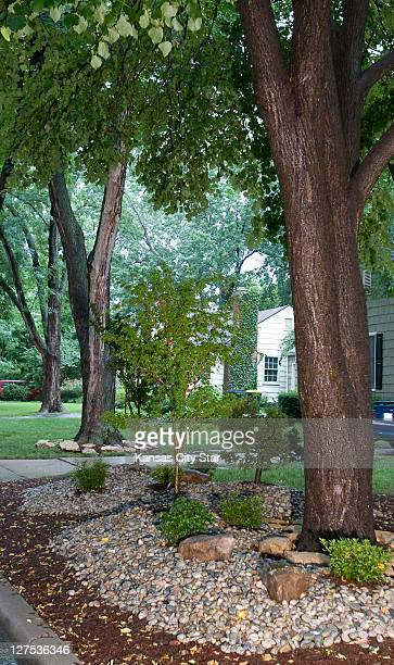 In a heavily shaded area river rocks define the border landscaping featuring Japanese maple trees a False Cypress and azaleas planted beneath a large...