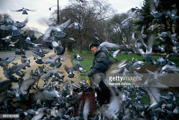 In a Parisian park a woman feeds pigeons flying all around her