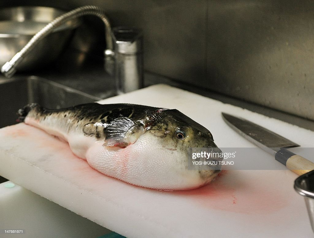 In a picture taken on June 5 a pufferfish known as fugu in Japan is seen on a chopping board to remove toxic internal organs at a Japanese restaurant...