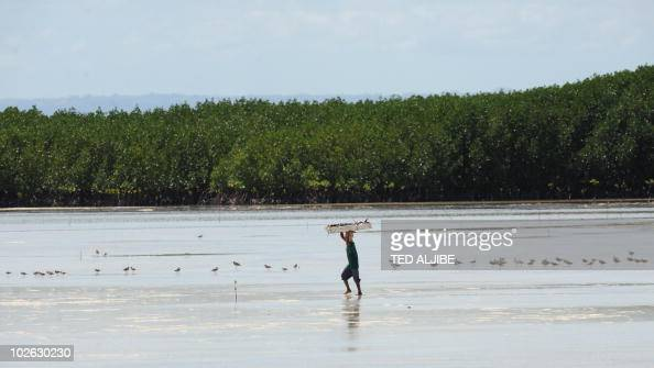 In a picture taken on March 3 2010 a resident walks past a flock of grey tailedtattlers in the reserve of San Vicente village Olango island in Cebu...