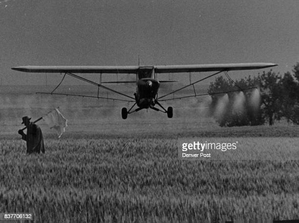 In Case of Attack Surrender The lowflying plane isn't attacking And the man with the white flag isn't surrendering The only war is against weeds and...