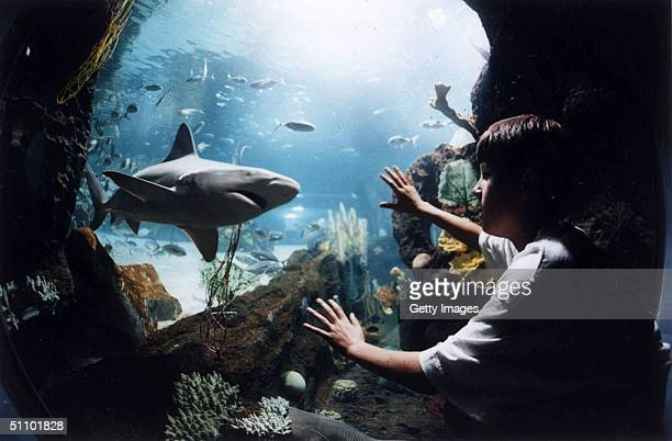 In FinalDay Preparation For Its May 15 Opening Oceanic Adventures Newport Aquarium Is Adding More Deadly Predators To Its 850000Gallon Surrounded By...