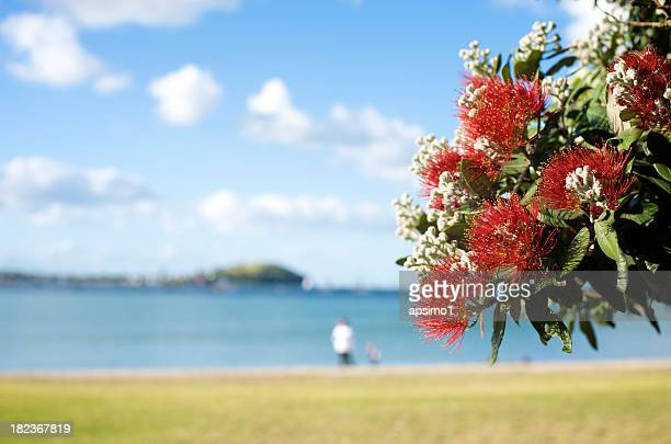 In focus Pohutukawa in front of beach with man and child