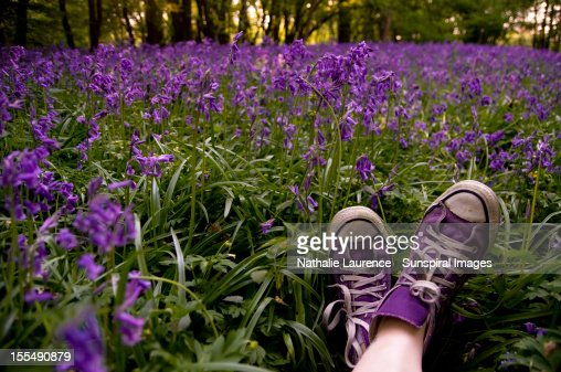 In purple woods