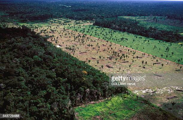 In Rondonia State vast swathes of forest are cleared and the land thus exposed soon becomes desert