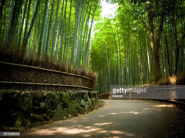 In the bamboo grove near Arashiyama