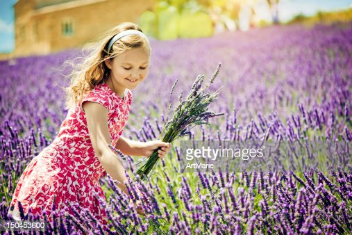 In the field of lavender : Stockfoto