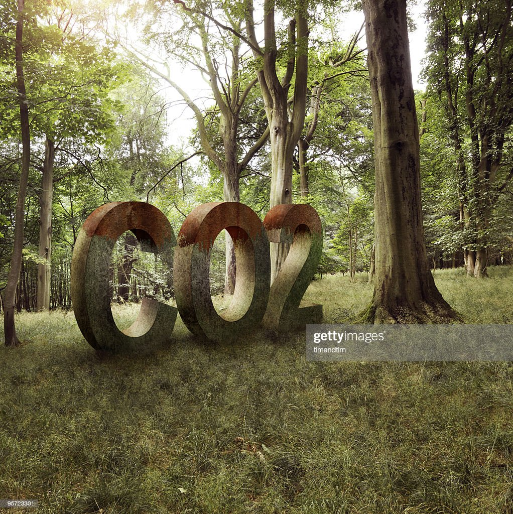 CO2 in the forest