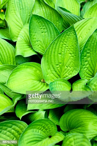In the Garden : Stock Photo