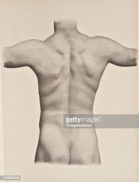 In the middle line extending from the external occipital protuberance to the sacrum is a longitudinal furrow especially well pronounced in musclar...