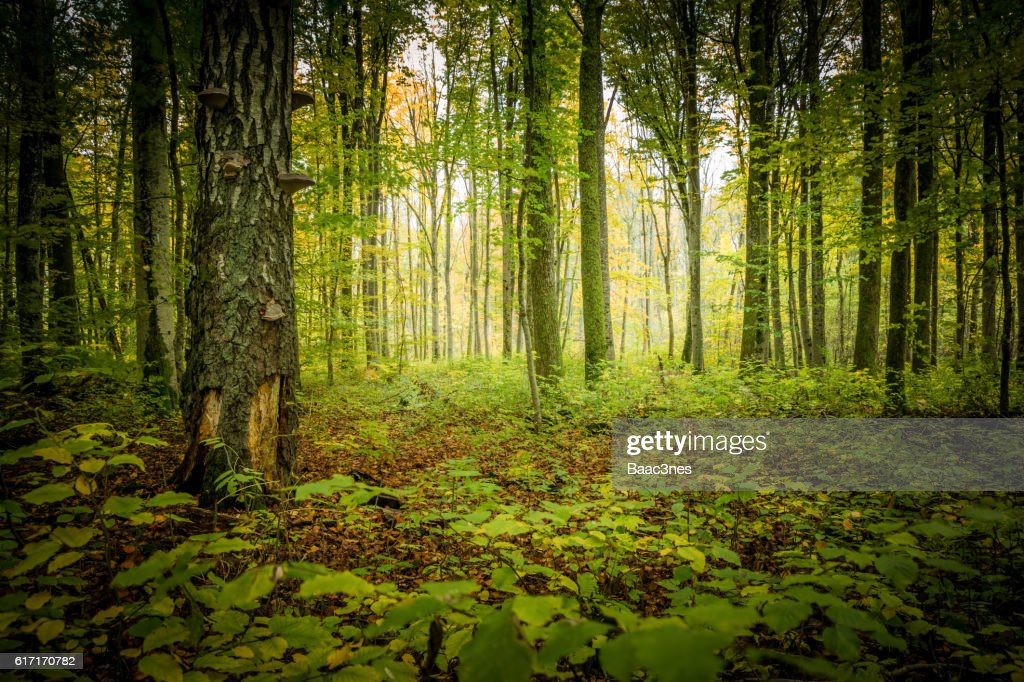 In the middle of the forest : Stock Photo