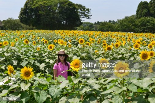 In the Midst of Sun Flower Farm