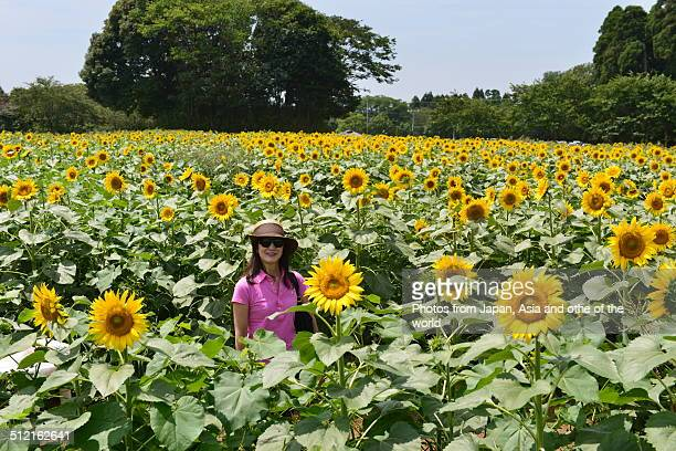 In the Midst of Sun Flower Farm